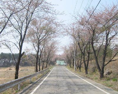 KurohoneSakura