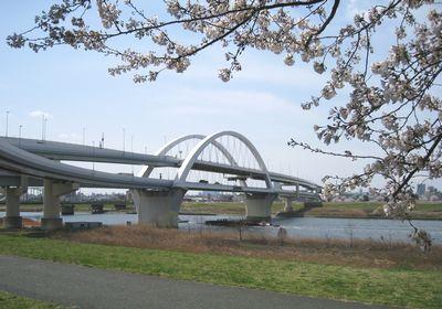 五色桜大橋と桜