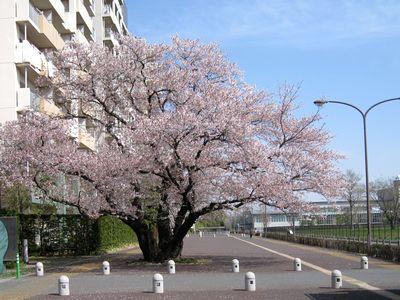 東山道武蔵路