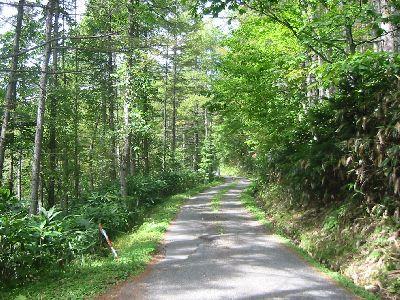岳見峠の道